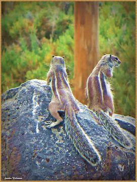 Fuerteventura Squirrels van Sandra Vollmann