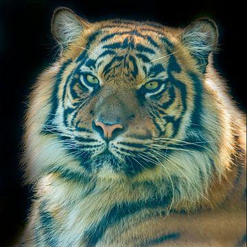 Tiger, Sibirischer Tiger Porträt von Gert Hilbink