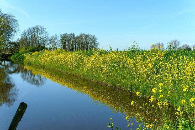 Polder met bloeiend koolzaad van Photo Henk van Dijk