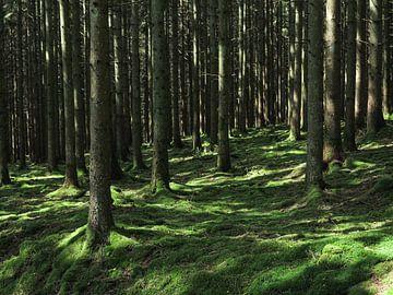 Bomen in de Belgische Ardennen