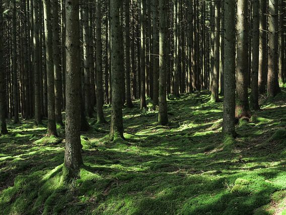 Bomen in de Belgische Ardennen van Paul de Vos