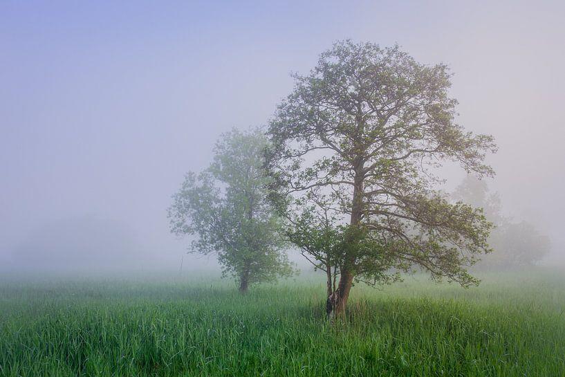 Bomen in een mistig rietland van Wilko Visscher