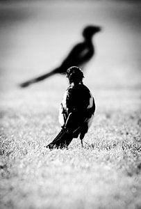 bird watching von melissa demeunier