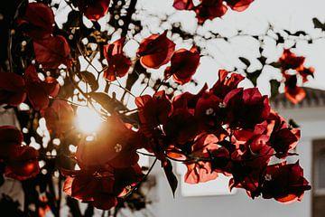 Rote Blumen mit Sonnenschein als Hintergrund von AIM52 Shop