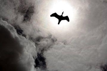 Zonnevogel van Liane Dhyana Pagie