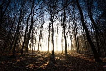 Mist in het bos Liggend van Jeffrey Van Zandbeek