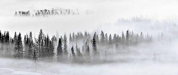 Foggy Forest, Mei Xu van 1x