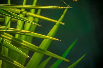 Pflanze mit Morgentau von Fred Leeflang