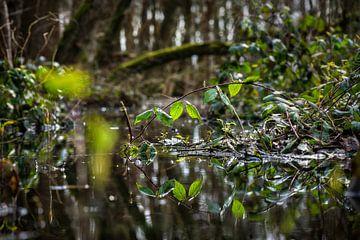 Natuurbeeld : bos met vijvertje van Chihong