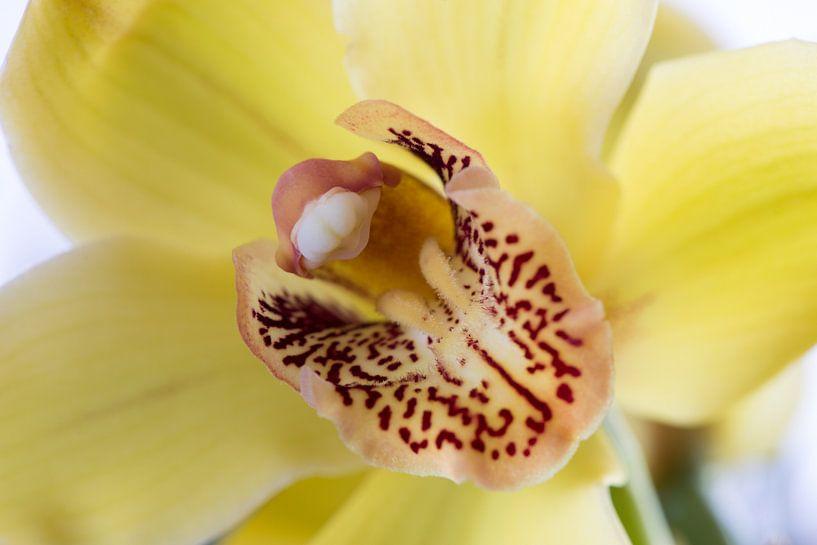 Gele Orchidee van Ronne Vinkx