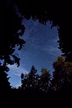 Sterrenhemel boven de takken van bomen en bergen, nachtlandschap. Toerisme in de Kaukasus in Abchazi van Michael Semenov