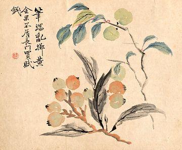 Tsubaki Chinzan.Loquat-Baum von Japan