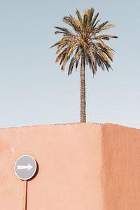 Palmboom in Marrakech van Leonie Zaytoune