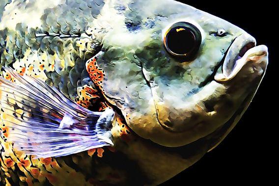Mooi gekleurde vis (close-up) van Art by Jeronimo