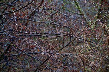 Kleine parels aan de boom van Thomas Jäger
