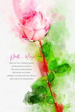 Rosa Rose von Theodor Decker