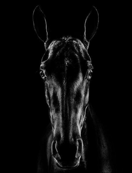 Das Pferd in Noir, Jackson Carvalho von 1x