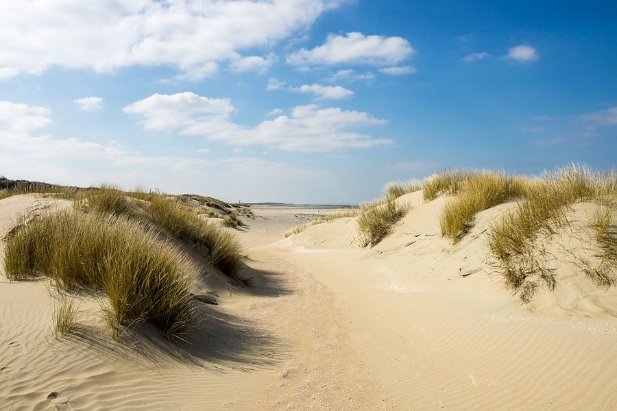 Duinen aan de Nederlandse Kust
