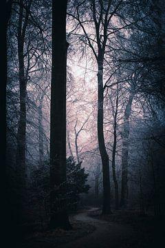 Violett-lila Licht durch den Nebel auf einem Waldweg in den Niederlanden von AIM52 Shop