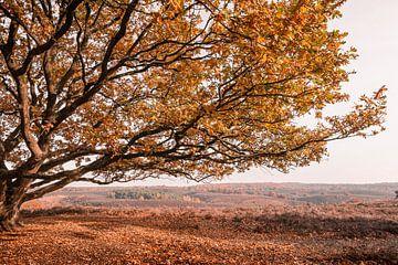Eiche im Herbst auf abfallender Heidelandschaft von Mayra Pama-Luiten