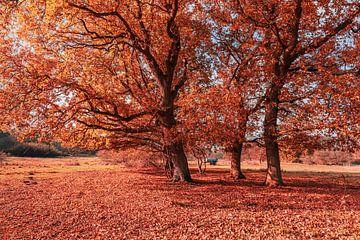 Herbstleuchten von Ursula Reins