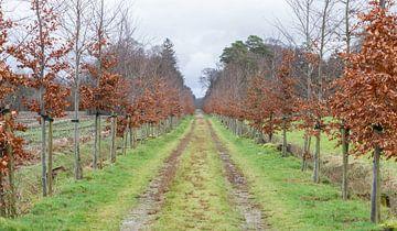 Road in a park van Micha Klootwijk