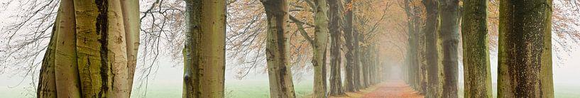 Buchenallee in Herbstfarben von Frans Lemmens