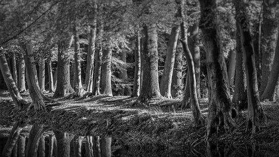 Bos in zwart wit van Peter Bolman