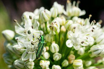 Weiße Blume und grüner Käfer von Mickéle Godderis