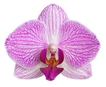 Orchidee van BVpix