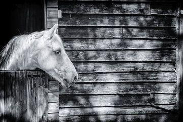 Pferd in der Sonne im Holzstall von Bas Meelker