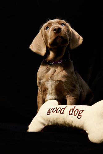 Good Dog van