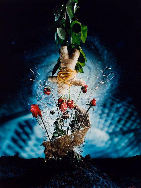 Pop met rozen van Rob Severijnen