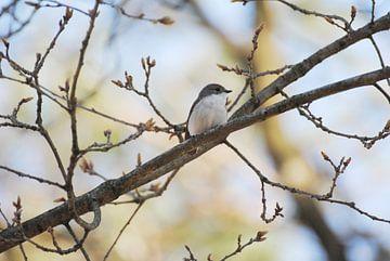 Vogeltje von Miranda Zwijgers