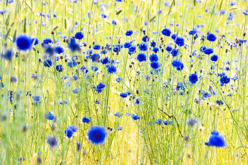 impressie van een korenveld van jowan iven