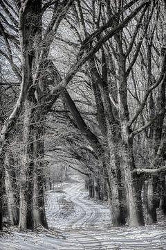 Winter in den niederländischen Wäldern von Eric Wander