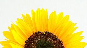 Zonnebloem van Jessica Berendsen