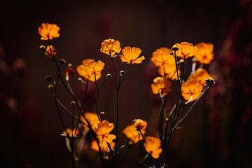 Yellow Magic van Hiske Boon
