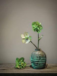 Vase de nature morte aux herbes de pigeon/Scabiosa