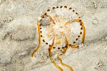afdruk van een kwal op het strand van Terschelling van Jeannette Kliebisch
