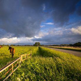 Donkere wolken trekken over het Hogeland in Groningen op een mooie voorjaarsochtend. Paarden grazen  van Bas Meelker