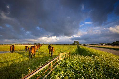 Donkere wolken trekken over het Hogeland in Groningen op een mooie voorjaarsochtend. Paarden grazen