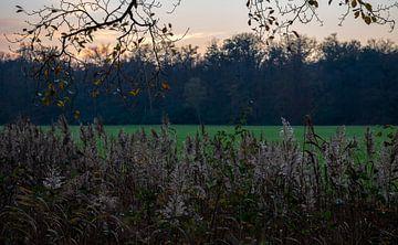 Zonsondergang boven riet, veld en bomen
