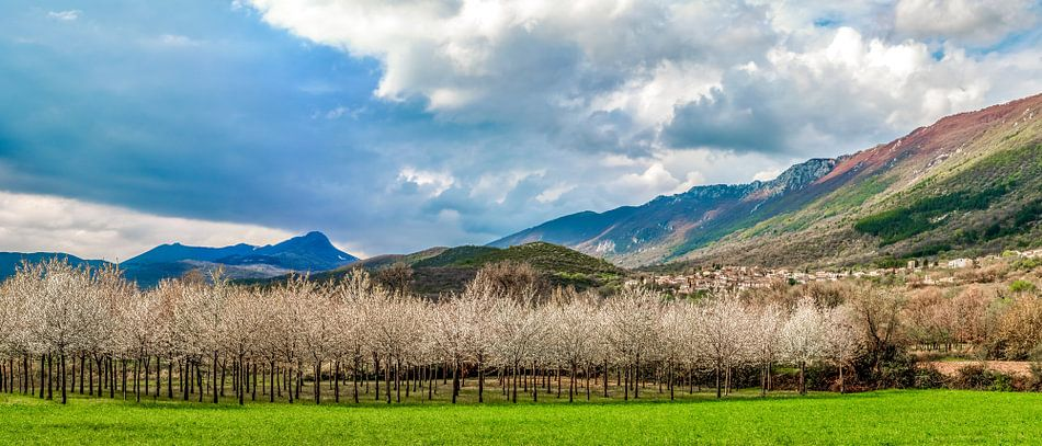 Flourishing orchard in Abruzzo
