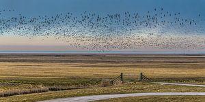 """Vogelvlucht boven het buitendijkse gebied """"Het Noorderleeg"""""""