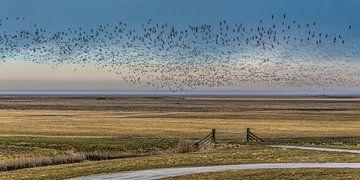 """Vogelvlucht boven het buitendijkse gebied """"Het Noorderleeg"""" sur Harrie Muis"""