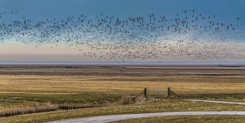 """Vogelvlucht boven het buitendijkse gebied """"Het Noorderleeg"""" von Harrie Muis"""