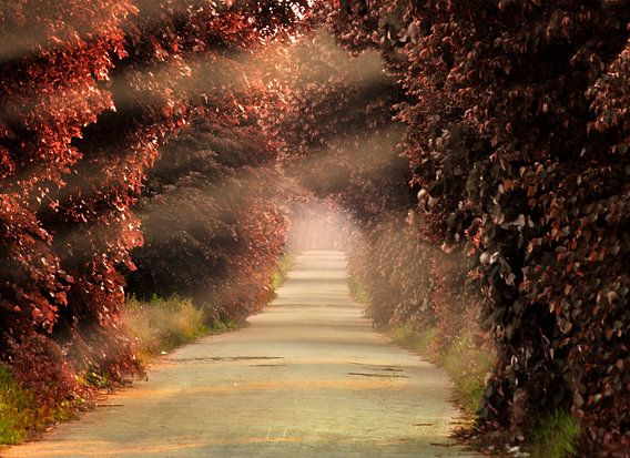 The Red Path van Ruxandra Proksch
