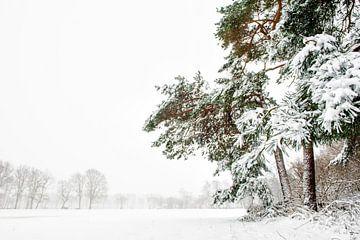 Tannenbäume auf dem Grundstück im Schnee. von Ron van der Stappen