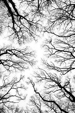 bomen silhouet van Klaartje Majoor